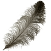 Ostrich Wing Feathers 18-24